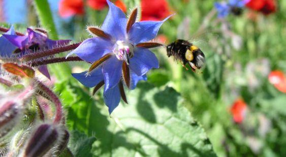 Jadalne Kwiaty Animals Bee