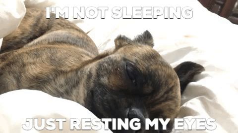 Sleep With One Eye Open Sleeping Gif By A Magical Mess Puppy