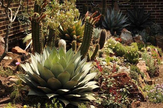 Steve Miles Cactus Garden Boulder Colorado Colorado