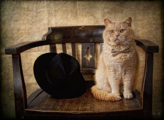 My lovely Gentleman by Eleonora Grigorjeva on 500px