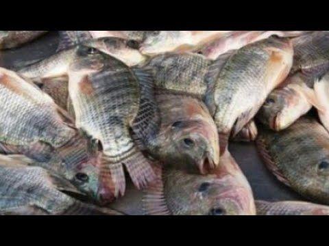 Shef Ahmad تنظيف السمك بالطريقه الصحيحه بالبيتhttps Youtu B Blog Posts Walrus Turtle