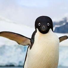 ¿Por qué los pingüinos no pueden volar?