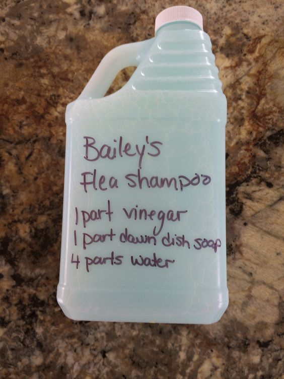 Homemade Flea shampoo,  mix together and put in an old shampoo or squeeze bottle, massage in and it works great it left my pug's fur soft and fluffy, smells better than a store bought flea shampoo!
