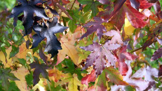 #Bäume mit toller #Herbstfärbung im #Garten https://freudengarten.de/show/49