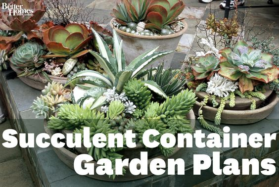 Learn tips for growing easy-care succulents in containers: http://www.bhg.com/gardening/container/plans-ideas/succulent-container-garden-plans/?socsrc=bhgpin052412