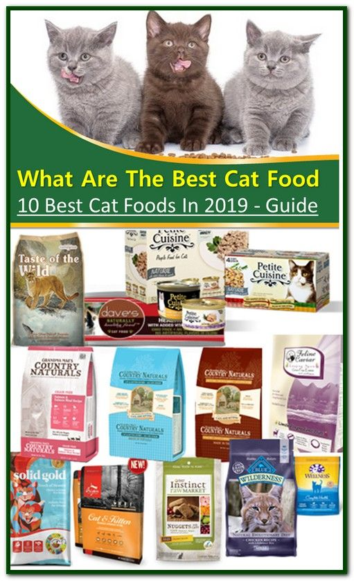 What Are The Best Cat Foods Best Cat Food Sensitive Stomach Cat Food Dry Cat Food