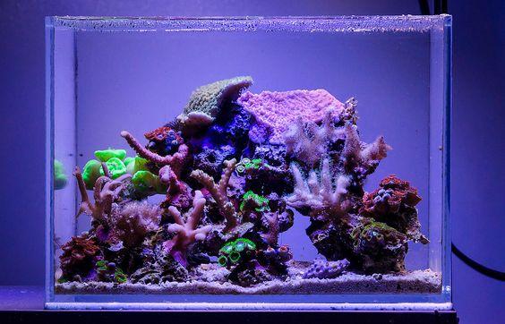 Dafil 2014 featured nano reefs featured aquariums for Aquarium recifal nano