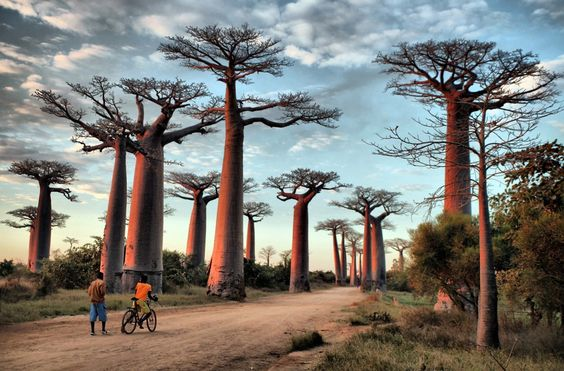 The Avenue of the Baobabs in Madagascar (image by Exodus client and photo competition winner George Pearson)