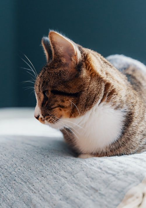 Adorable Cat Pictures Download Free Images On Unsplash Cute Cats Cats Cat Pics