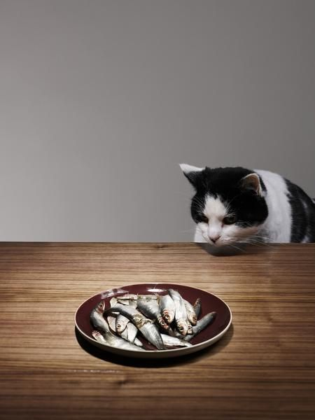 8 Common Foods That Your Cat Should not Eat