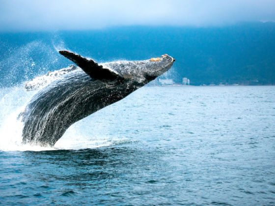 10 hotels that are perfect for whale watching this spring | Whale watching,  Zihuatanejo, Mexico hotels