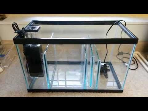Building A 10 Gallon Aquarium Sump On A Budget Youtube Fish Tank 10 Gallon Fish Tank Fish Tank Design