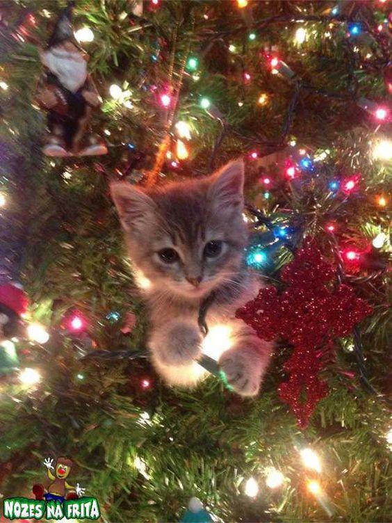 árvores de natal com gatos - Pesquisa Google