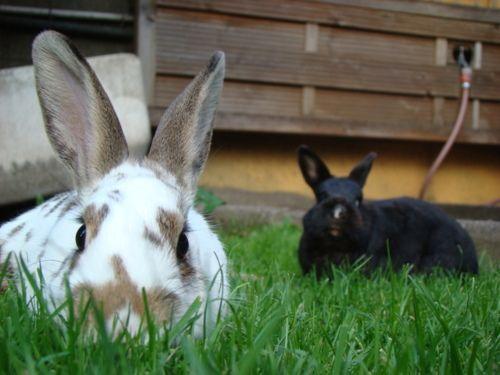 Bunnies Lie in Wait - June 15, 2011