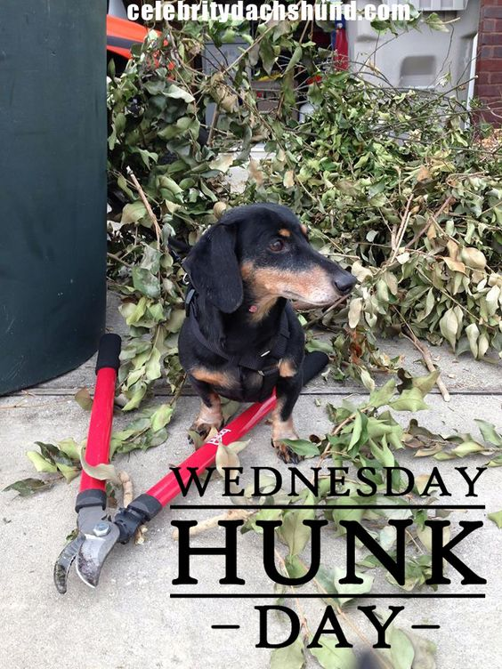 Today S Wednesday Hunk Is Buttons From Pensacola Florida