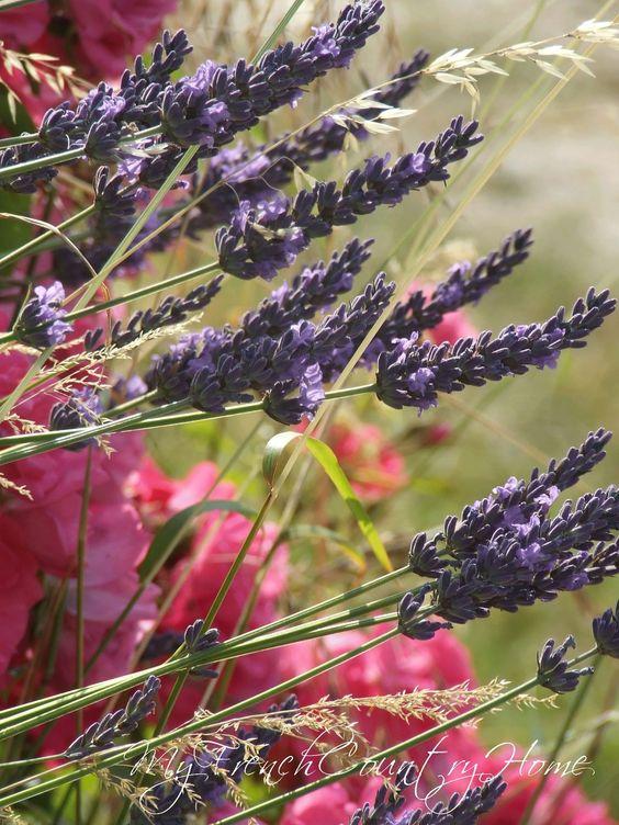 Lavender love.