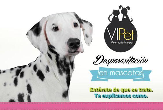 Centro VIPet  ¿QUE ES LA DESPARASITACIÓN? Entérate en https://www.facebook.com/photo.php?fbid=10152085673876597&set=a.10151777966511597.1073741825.6249861596&type=1&theater