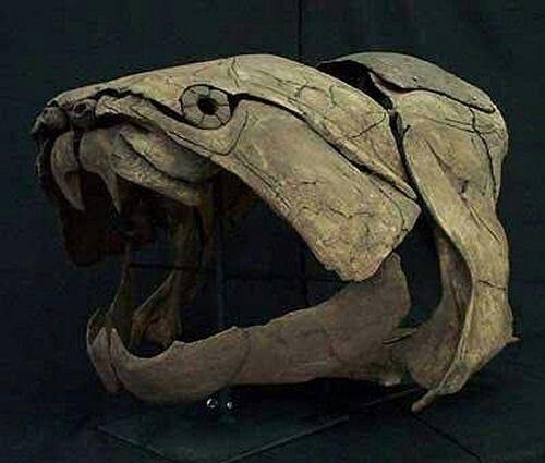 Dinichthys