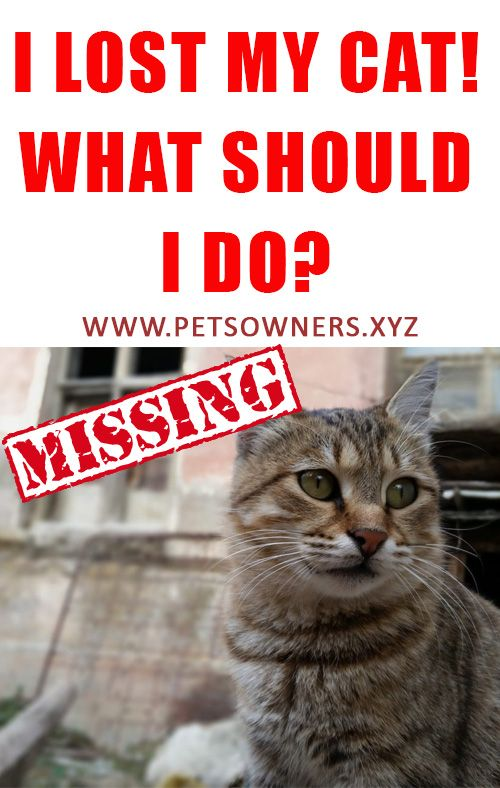 I Lost My Cat What Should I Do Cats Best Bond Pets