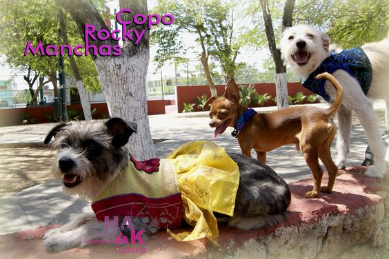 Arneses, vestidos ropa pare perro artesanal Hanak. Chiapas, México