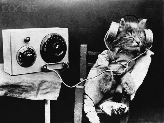 Tibby the cat tunes into a radio program.
