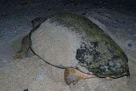 socotra marine | Socotra Marine Realm