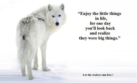 FB Let the Wolves run free