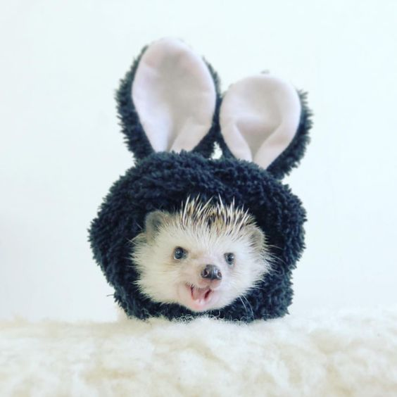 The bunny hedgehog 🦔🐇💕