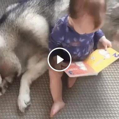 Bebê lendo historinha para o cachorro