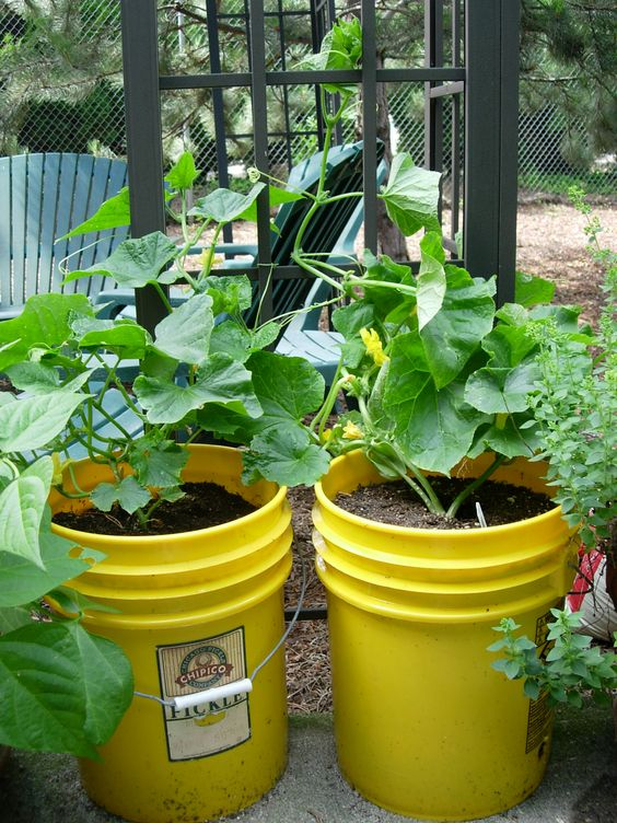 Spring gardening tip 2 gardening with containers for Gardening 5 gallon bucket