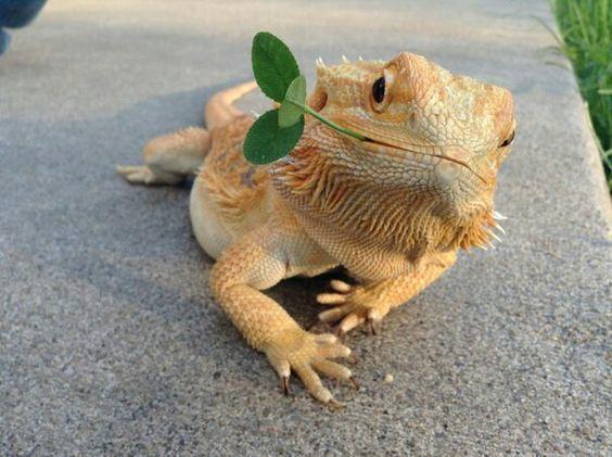 葉っぱをくわえるかわいいトカゲの壁紙