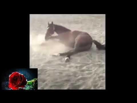 شاهد لحظة خروج الروح من الحصان Painting Art