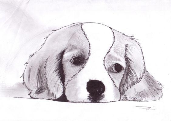 1000 id es sur le th me dessins d 39 animaux sur pinterest - Dessin d animaux facile a reproduire ...