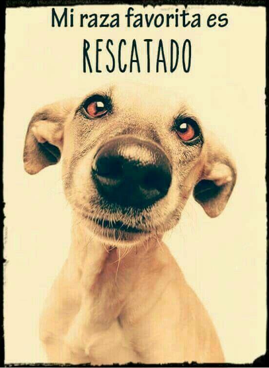 Adopta No Compres Animales Perros Y Perros Frases