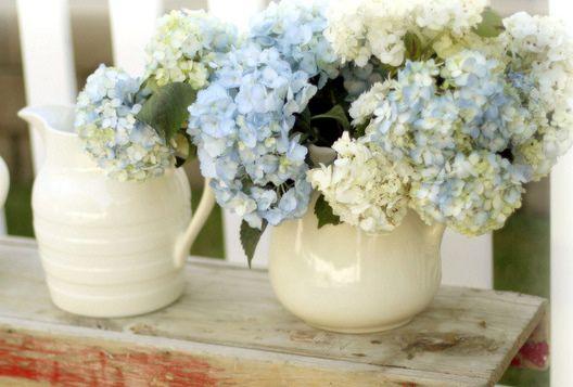 Mi Casa Encantada: Hortensias