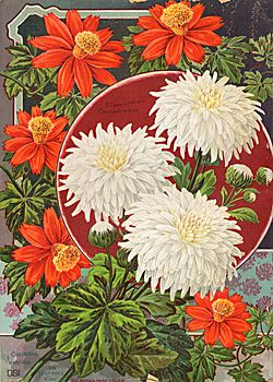 Hewitt & Co Seed Catalogue 1891 I love the Dahlias in the center. I think that's what they are.