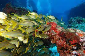 Resultado de imagem para fundo do mar