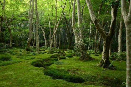 a surreal garden at gioji: fotografía de Gio-ji Temple, Kioto ...
