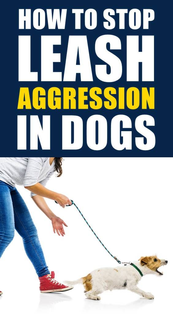 Is Your Dog Showing Signs Of Aggression Dog Aggression Can Be A