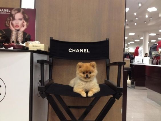 Jiff, the happiest Pomeranian in the world | The 30 Best Dogs Of2012