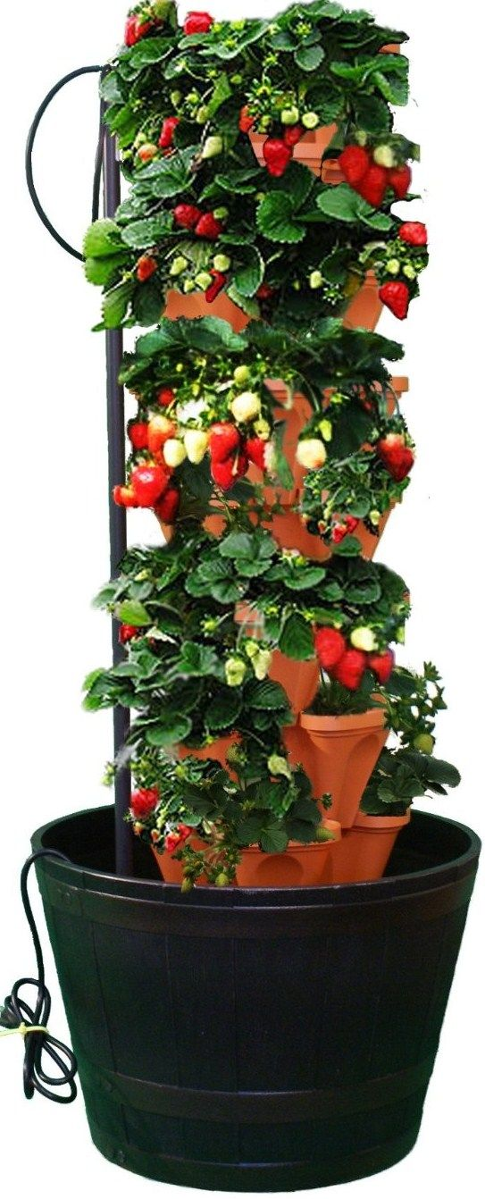 Pvc strawberry tower vertical pvc strawberry planter garden pinterest strawberry tower - Garden tower vertical container garden ...