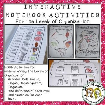 levels of organization science interactive notebook activities life science and curriculum. Black Bedroom Furniture Sets. Home Design Ideas