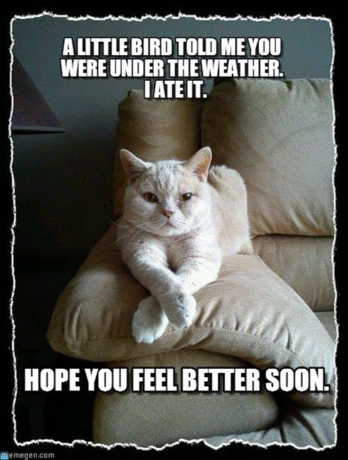 40 Funny Get Well Soon Memes To Cheer Up Your Dear One Sayingimages Com Cat Quotes Funny Best Cat Memes Cat Memes
