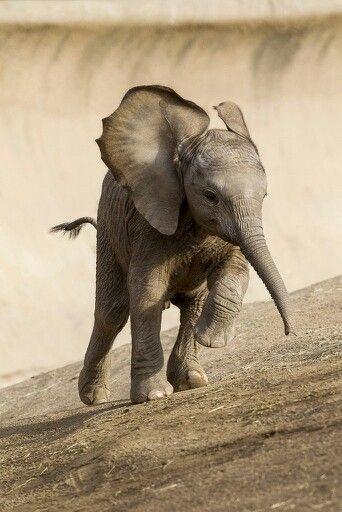 (2013-07) Elefant