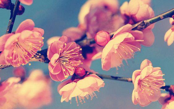 Vintage flower desktop wallpaper download hd sch ne - Vintage bilder kostenlos ...