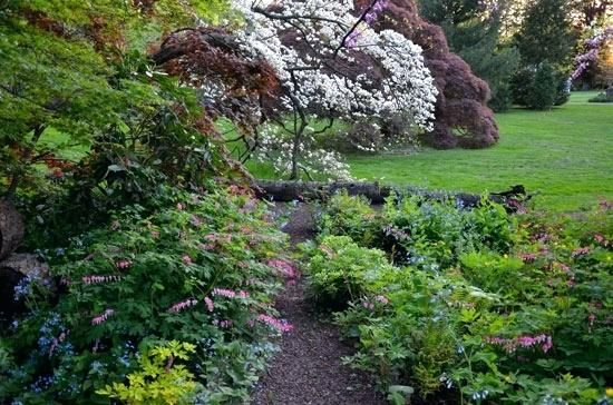 Woodland Garden Ideas The Edge Of This Garden Shows The Layers