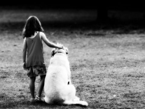Your Child Has No Friends Now What Labrador Puppies For Sale