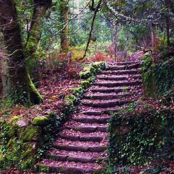 O camiño outonal no Bosque Encantado en Aldán. #cangas #morrazo #galicia