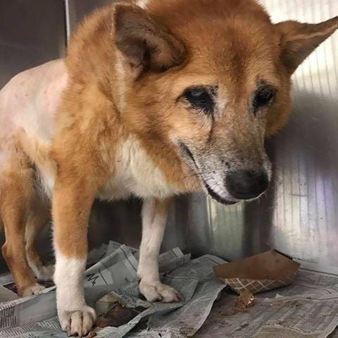 Urgent Dogs of Miami (@urgentdogsofmiami)   Instagram photos and videos