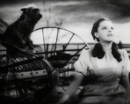 Terry (November 17, 1933 – September 1, 1945) was a Cairn Terrier whose most famous role was Toto in the movie The Wizard of Oz (1939). She appeared in 15 different movies but was only credited in that one, though not as Terry but as Toto.[1